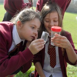Girls examine bugs they have found