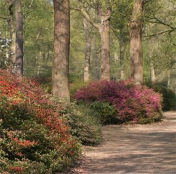 Isabella Plantation, Richmond Park