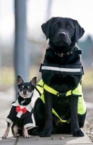 day-11-blog-NI-dogs