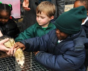 Children with ferret in city farm