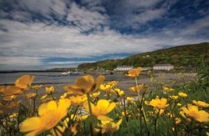 spring flowers at Rathlin harbour