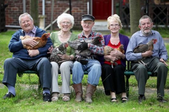 Five people with hens on their laps